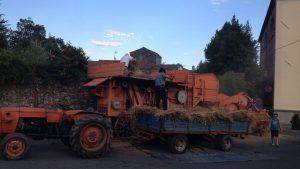 Read more about the article La farina e i grani antichi